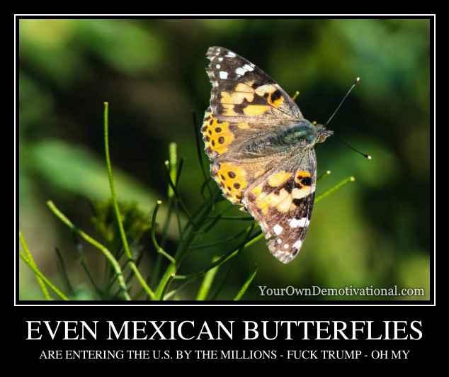 EVEN MEXICAN BUTTERFLIES