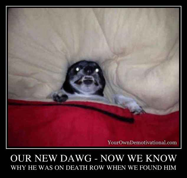OUR NEW DAWG - NOW WE KNOW